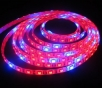 LED stripe 5050, 14W/m, Red:Blue 5:1, plant, 60 diodes, 1 m, waterproof IP65